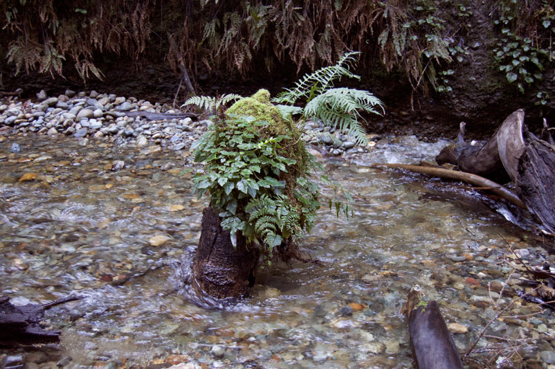 Fern_Canyon_Hat