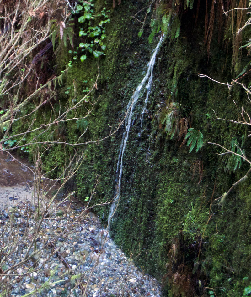Fern_Water_Fall