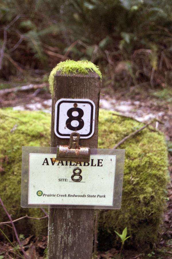 moss posts, Elk Creek Redwoods Campground.