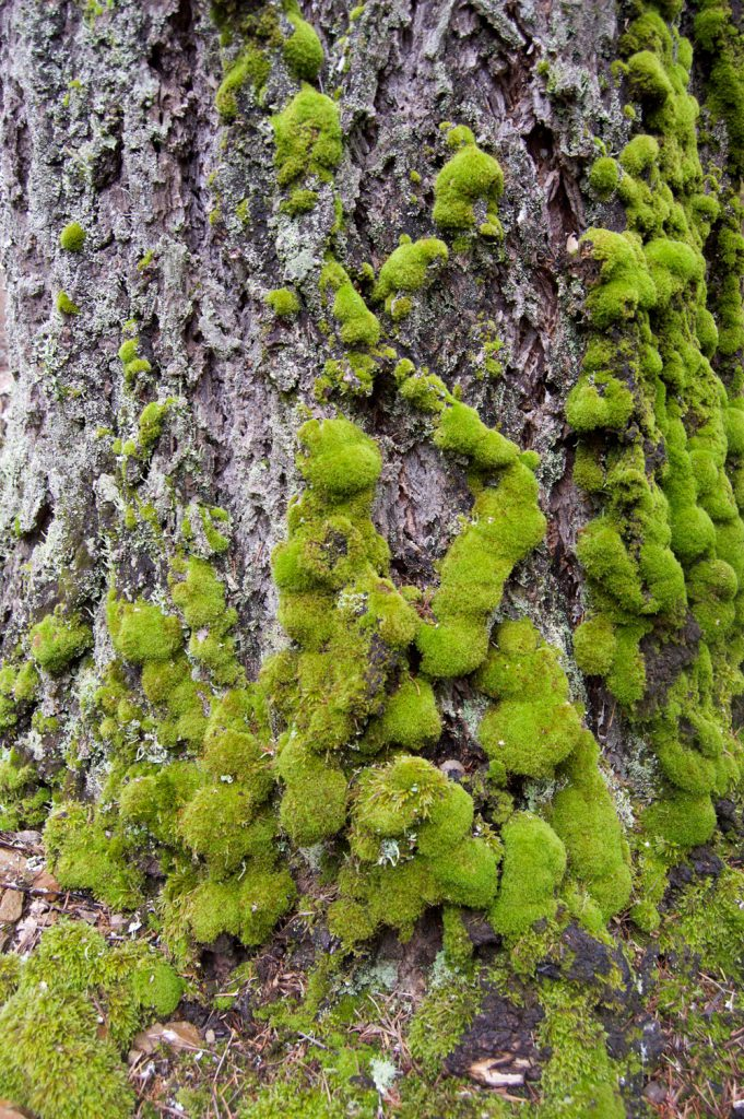 moss_background2