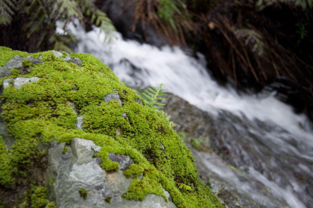 moss_water