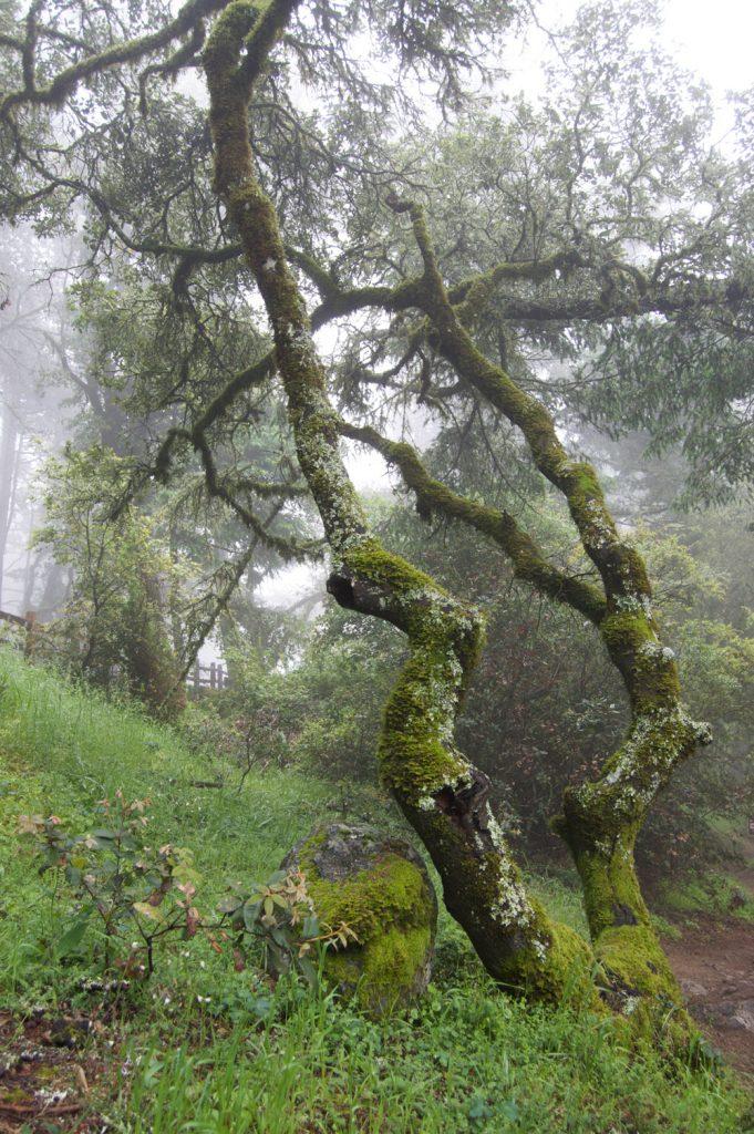 sR_tree