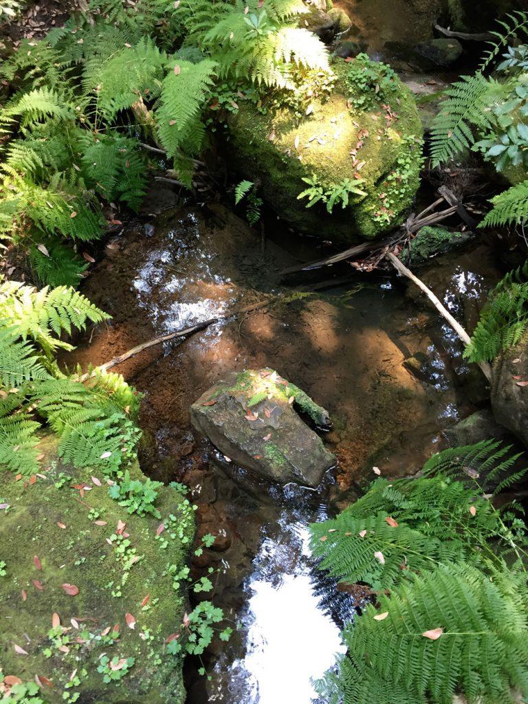 Mossy Rocks | Japanese Garden