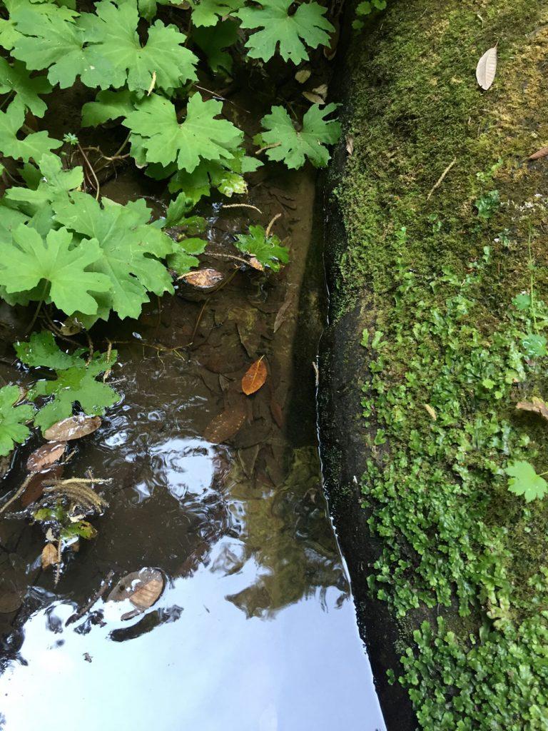 leaves_moss